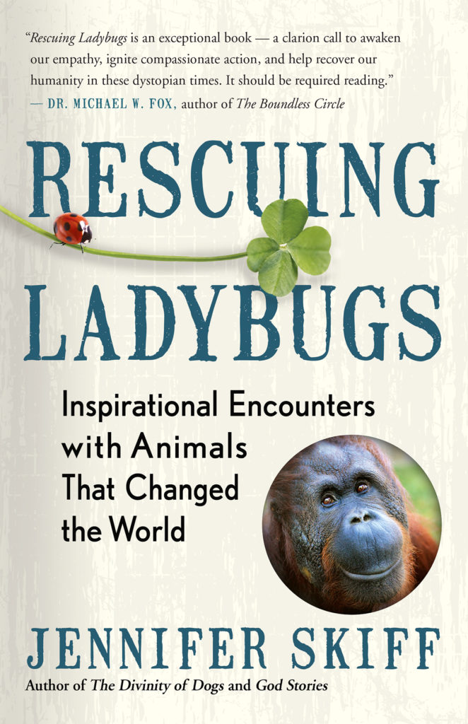 Book Cover: Rescuing Ladybugs